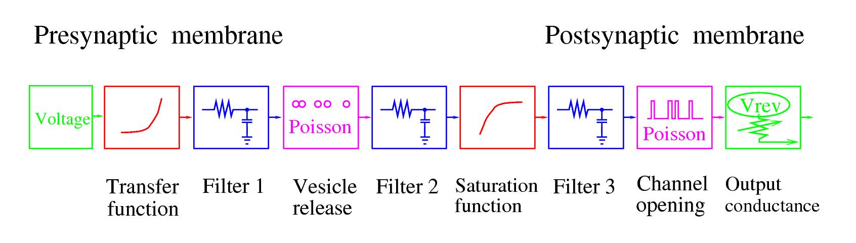 NeuronC User's Manual Part II